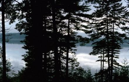 Bristol Pines
