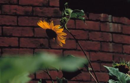 Brick Sun