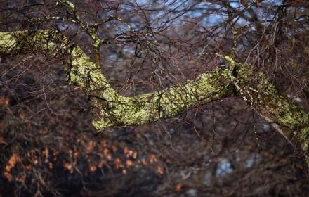 Green Bark 3