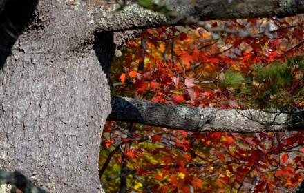 Tree Fall 1
