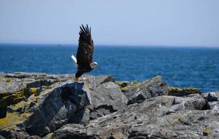 Eagle Rock 1