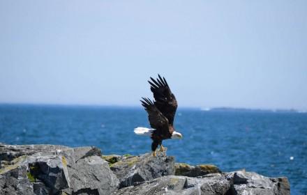 Eagle Rock 2