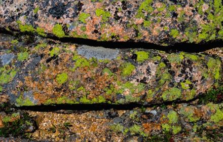 Lichen Line 2