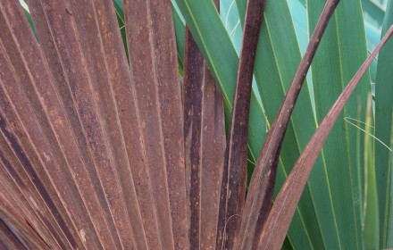 Frond 2
