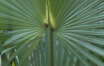 Frond 1
