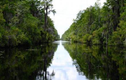 Swamp Vista